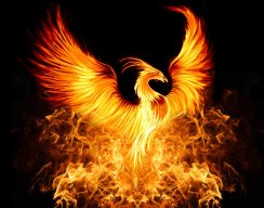 phoenix vtq